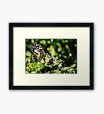 Nature Up Close Framed Print