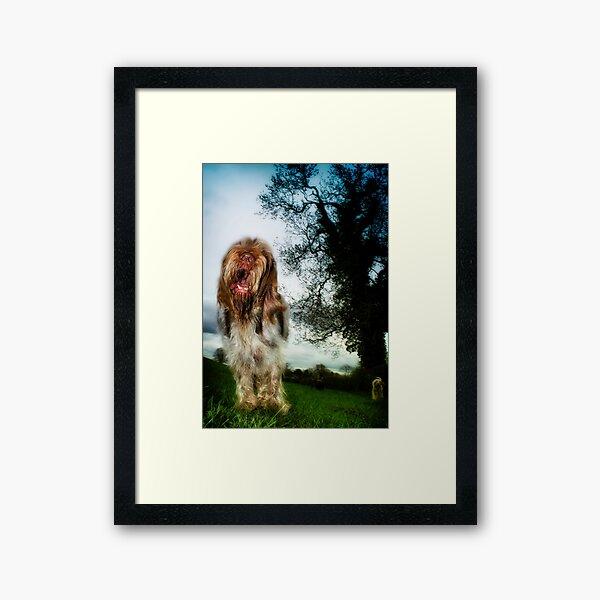 Chatty Spinone Framed Art Print