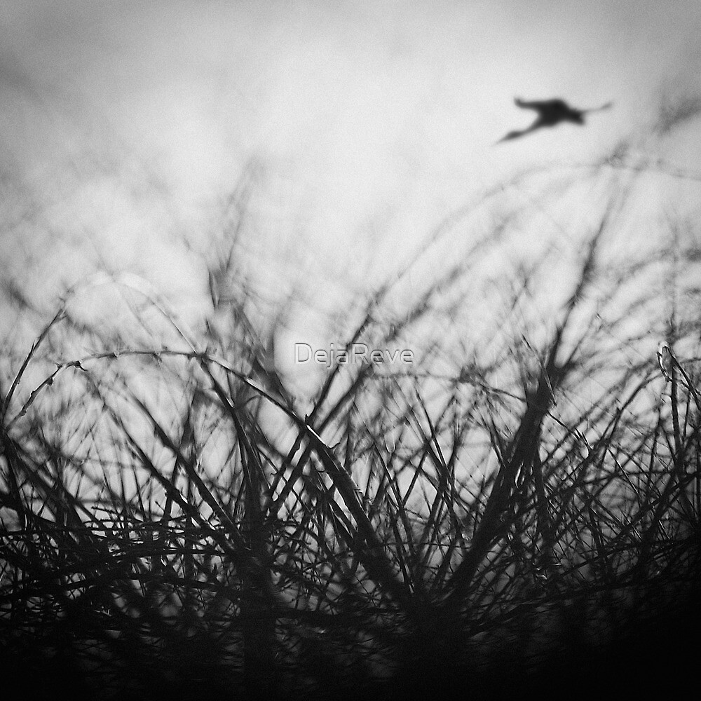 Fly... by DejaReve