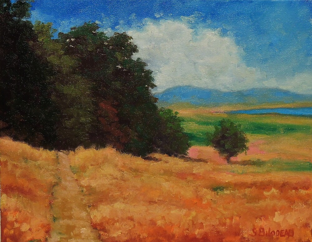 Deer Island Marin County by Steven Guy Bilodeau