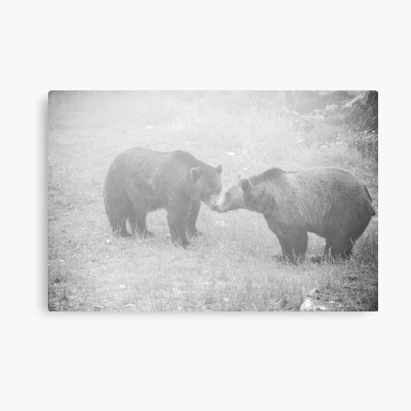 Fog's Kiss Canvas Print