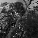 Black and White Tree by Sue Fallon Photography