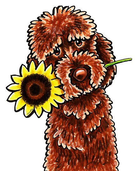 Sunny Chocolate Labradoodle by offleashart