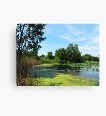 East Harbor State Park - Algae Bloom Canvas Print