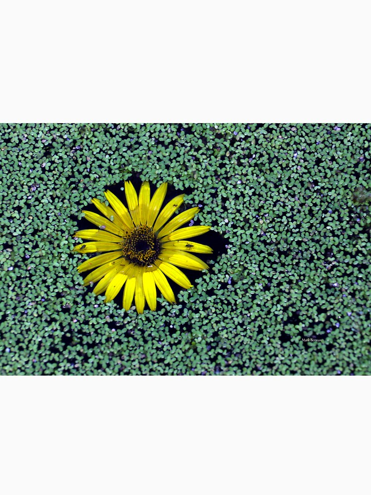 Yellow Flower in Duckweed with Three Little BUGS by mark-bugs-org
