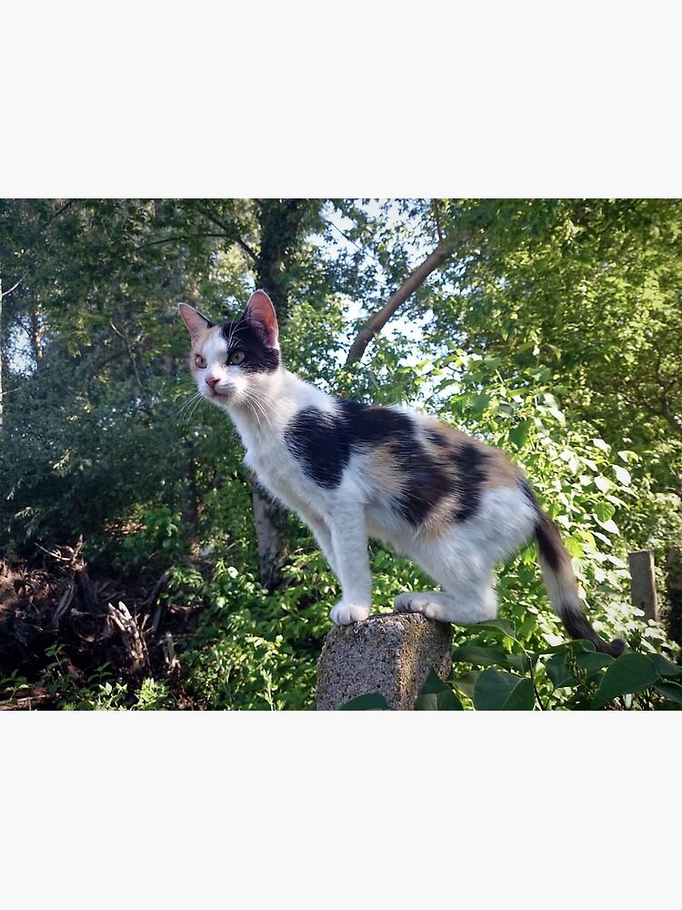 Katze Lagertha auf Wacht von Gourmetkater