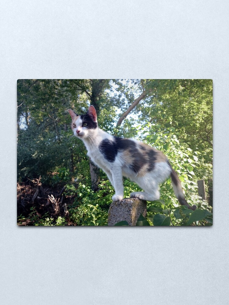 Alternative Ansicht von Katze Lagertha auf Wacht Metallbild