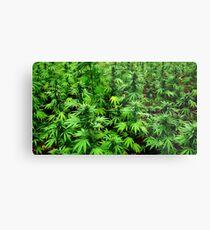 Marijuana (Weed) Metal Print