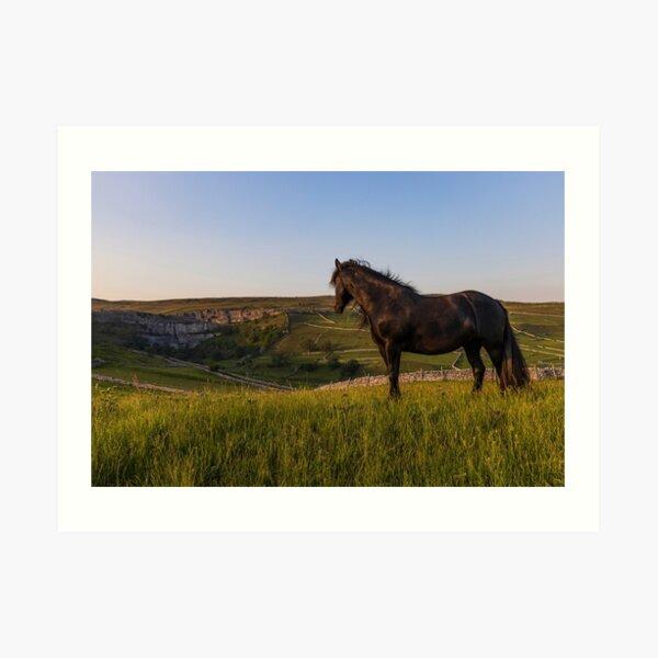 Dales Pony Art Print