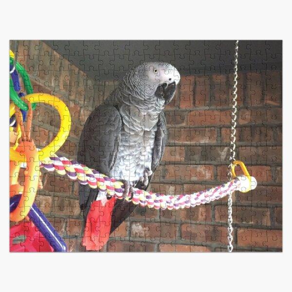 Einstein Parrot on the porch Jigsaw Puzzle