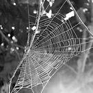 web- B&W by Jack Doherty