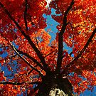 Trees on Fire by Kerri Ann Crau