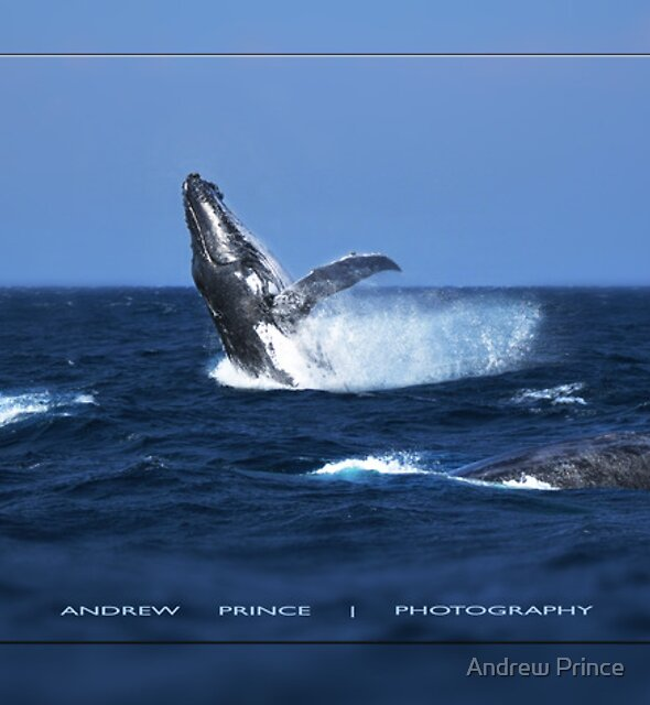 Having a Whale of a Time by Andrew Prince