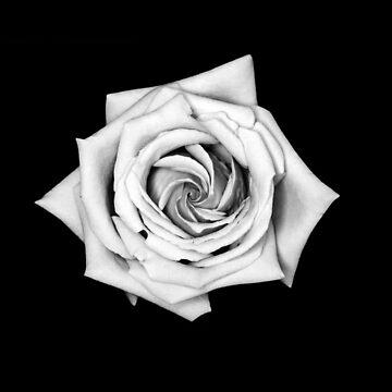 Rose by LittleRedTrike