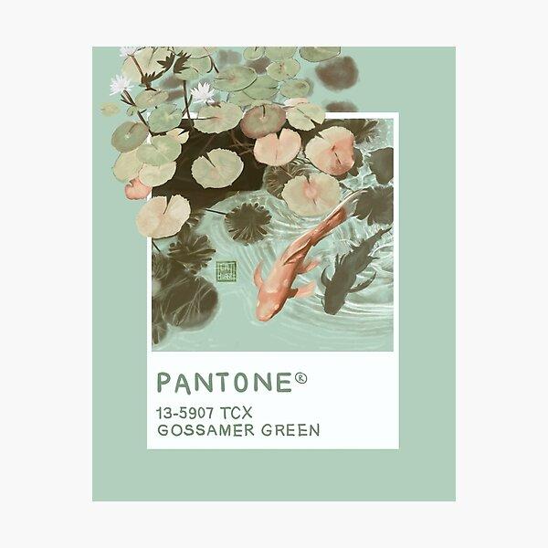Gossamer Green Pantone  Photographic Print