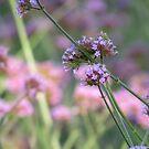 Field of flowers  by debraroffo