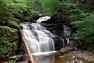 Mohican Falls in Summer Splendor by Gene Walls