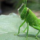 Greengrasshopper by Heavenandus777