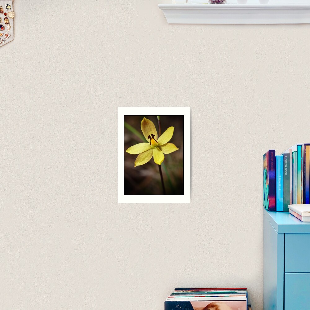 Lemon Scented Sun Orchid Art Print