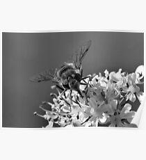Black and White Wildlife Poster