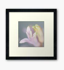 soft tones Framed Print