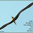 Laat my vandag ... by Rina Greeff