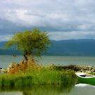 A orillas del lago ,Villarrica ..............Chile. by cieloverde