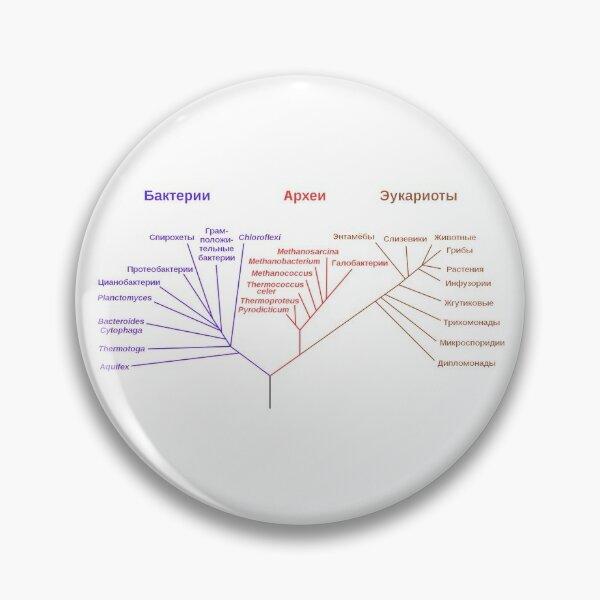 Филогенетическое древо, построенное на основании анализа рРНК, показывает разделение бактерий, архей и эукариот Pin