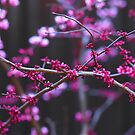 Springtime in Melbourne Australia by Ronald Rockman