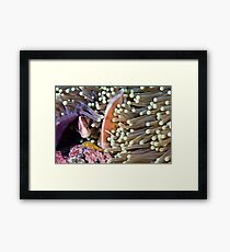 Devoted Framed Print