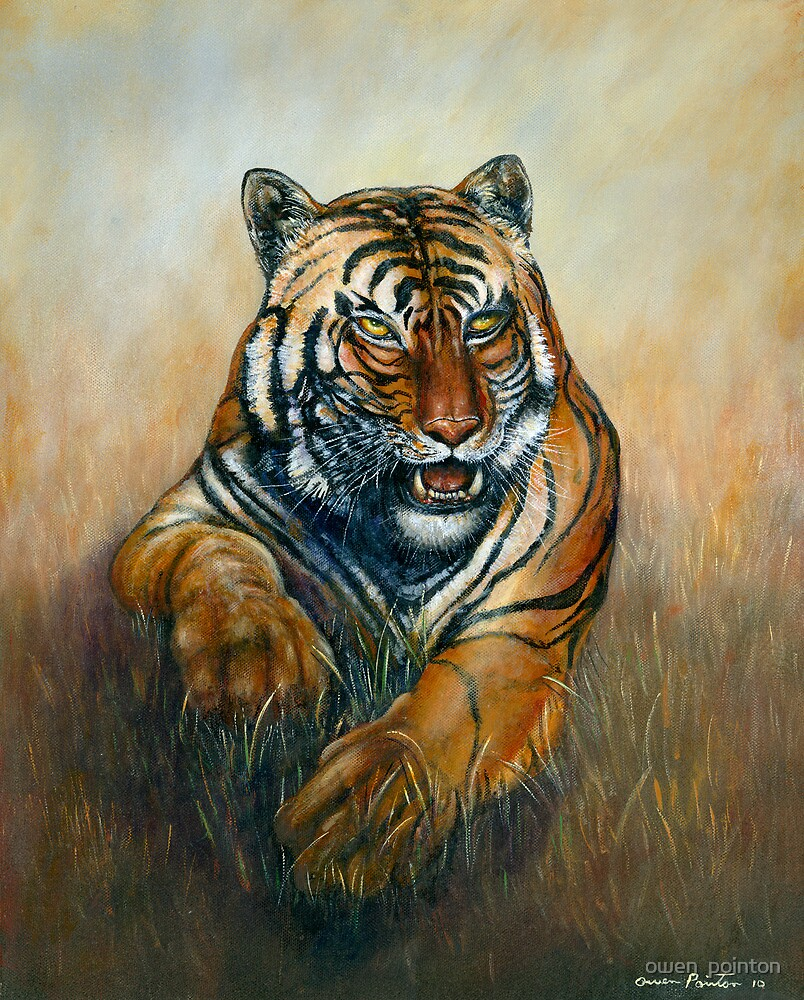Chinese Tiger by owen  pointon