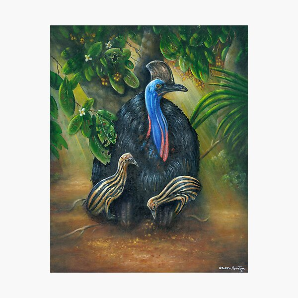 Cassowary In The Morning Light Photographic Print
