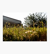 Cat in Long Grass Photographic Print