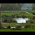 Rural Scene  by mspfoto