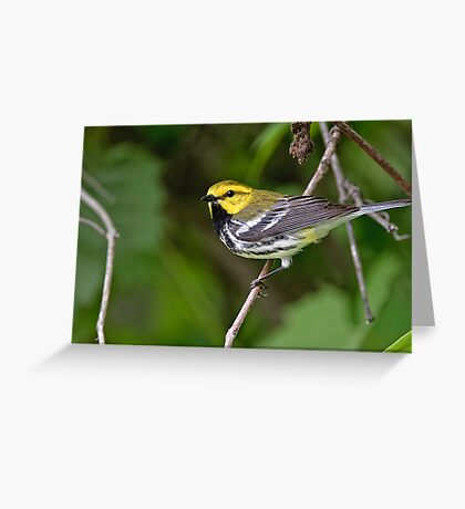Black Throated Green Warbler Greeting Card