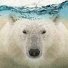 Polar by Vin  Zzep