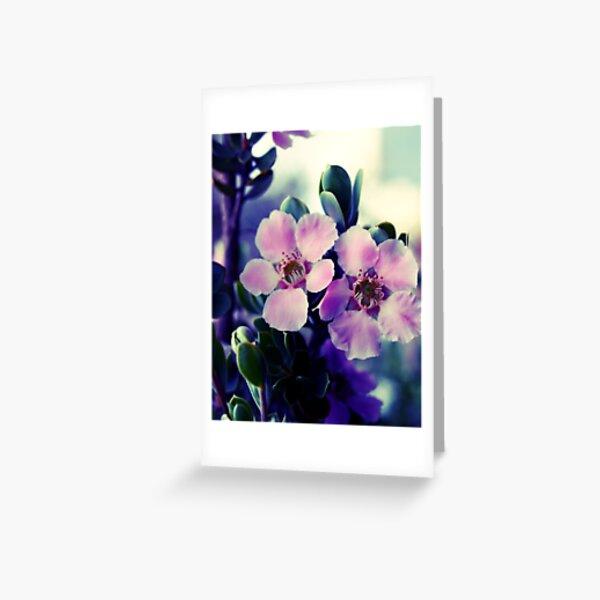 Spring Blossom, tea tree flowers Greeting Card