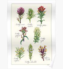 Castilleja Wildblumen Poster