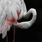 Flamingo by Sally Green