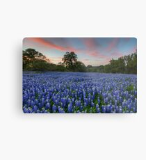 Texas Bluebonnet Images - Evening in the Texas Hill Country 1 Metal Print