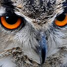 Eagle Owl Eyes by George Crawford