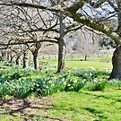 Spring at Ridgley by Judi Rustage
