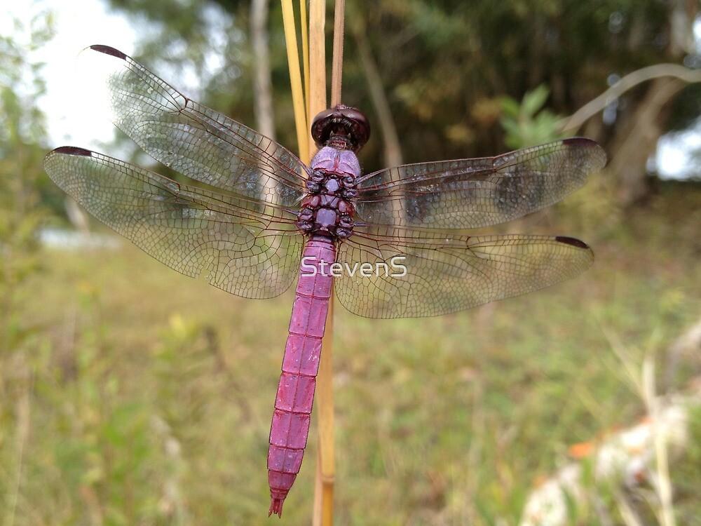 Drangon fly by StevenS