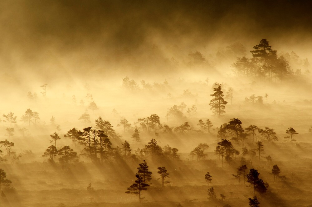 3.9.2013: Morning in Torronsuo National Park IV by Petri Volanen