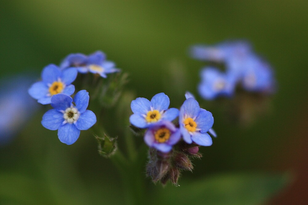 Forget Me Not by Keith G. Hawley