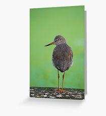 Redshank On Green.. Greeting Card