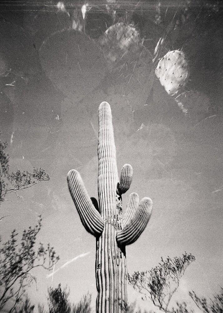 Cactus X2 Holga Double Exposure Photo by strayfoto