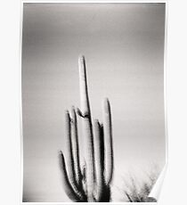 Saguaro Holga Photo Poster