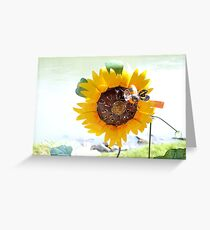 Sunflower for all seasons Greeting Card