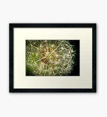 Dandelion - 'clock flower' Framed Print